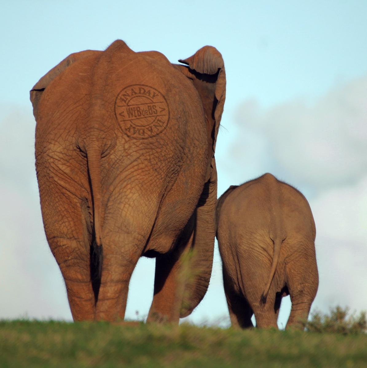 solo-elefante